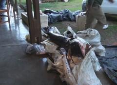 Sema apreende mais de 400 kg de pescado irregular em Alta Floresta