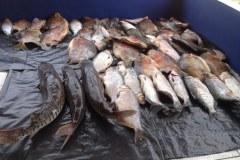 Sema apreendeu quase duas toneladas de peixes e aplicou mais 200 mil reais em multas no MT