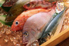 Semana do peixe - peixes frescos 2
