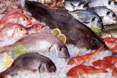 Semana do peixe - peixes frescos