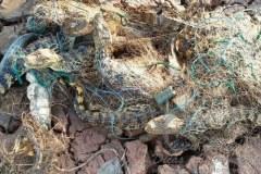 Sete jacares ficam presos em rede dentro de lagoa quase seca em MG