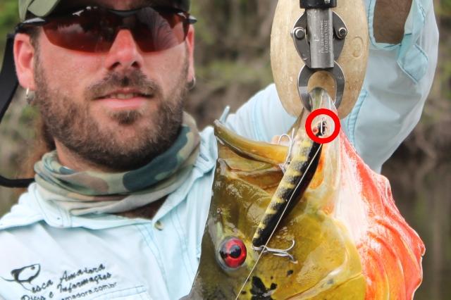 Snap um acessorio indispensavel na pesca com iscas artificiais