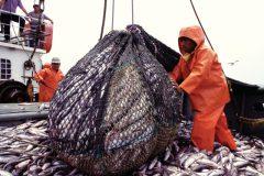 Sobrepesca afeta os estoques pesqueiros