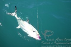 Sororoca - Foto Fly Fishing Brasil