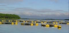 Tanques rede na usina de Ilha Solteira entre SP e MS