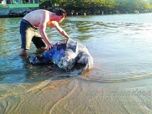 Tartarua gigante encontrada morta em SC