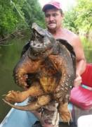 Tartaruga Aligator fisgada em Oklahoma-USA