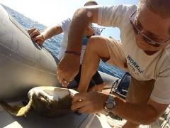 Tartaruga marinha é salva por ambientalistas em Santos (Foto: Divulgação / Fundação Florestal)