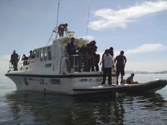 Tecnicos investigam morte de peixes na baia de guanabara no RJ