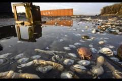 Toneladas de peixes aparecem mortos nas praias do Chile