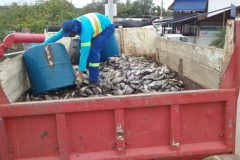 toneladas-de-peixes-mortos-sao-recolhidos-na-lagoa-juara-em-serra-es
