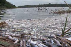 toneladas-de-peixes-mortos-sao-recolhidos-na-lagoa-juara-em-serra-es-3