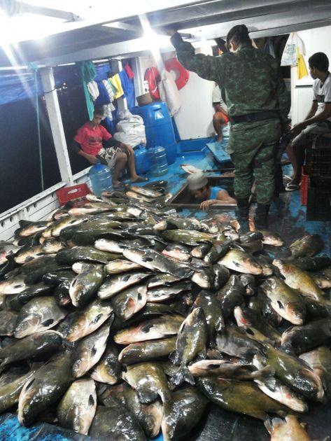 Toneladas de pescado ilegal foi apreendida em Manaus-AM