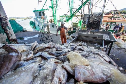 Trabalhador de cooperativa descarregando pescado 2