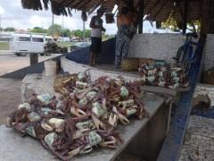 Com a nova legislação, a carga de caranguejo deverá ser transportada em caixas plásticas vazadas (Foto: Douglas Júnior/O Estado)