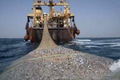 Tratado mundial contra pesca ilegal entra em vigor 2