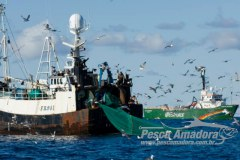 Tratado mundial contra pesca ilegal entra em vigor