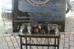 Tres adolescentes sao apreendidos por pesca predatoria no Rio Miranda em MS 1