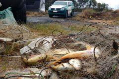 Tres homens sao presos por pesca predatoria em Palmeira-PR