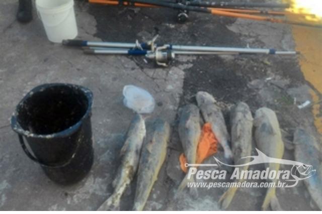 tres-pessoas-sao-presas-por-pesca-predatoria-de-especie-protegida-no-rio-tramandai-rs