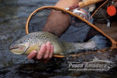 Truta-flyfishing
