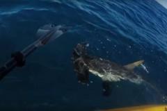 Tubarao Martelo persegue pescador em caiaque na Califoria-USA
