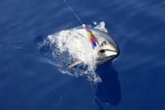 turismo-de-pesca-esportiva-10-especies-esportivas-encontradas-no-brasil-atum