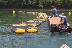 Walmart tem cerca de 80% do volume de pescados comercializados ja rastreados 4