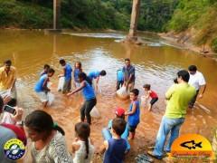 alunos soltando curimatas no rio são francisco em Piumhi-MG