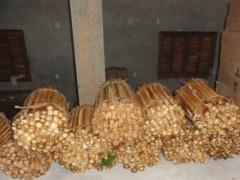 Palmito apreendido era armazenado no chão da garagem antes do envasamento (Foto: Divulgação Patram-RS)