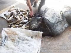 apreensao de pescado e redes de pesca em Ouroeste-SP