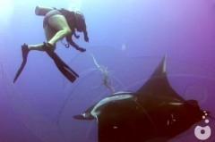 arraia pede socorro para mergulhador