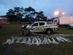 Mais de 35 tarrafas foram apreendidas durante a operação Mar Seguro (Foto: Divulgação Patram)