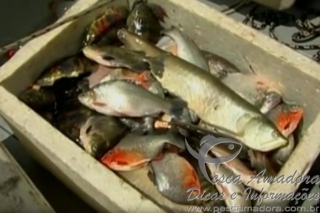 combate a pesca predatoria apreende redes e peixes no Para (Foto reproducao G1) 2
