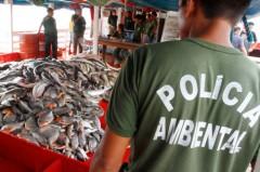 No período do defeso, várias espécies são protegidas da pesca, considerada crime ambiental – Alberto César Araújo