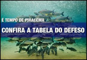 Confira o Defeso da Piracema 2016/2017