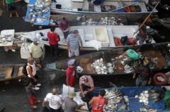 feira de peixes no amazonas