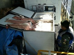 fiscalizacao apreende 2T de pirarucu em porto de Manaus