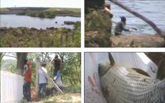Pescador se prepara para mergulhar e fazer pesca predatória (Foto: Reprodução/TV TEM)