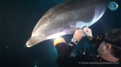golfinho-pede-ajuda