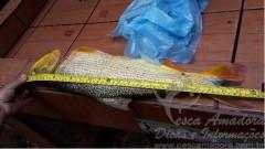 homem e preso por pesca predatoria no rio Miranda