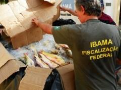 Peixes apreendidos foram doados para instituições e comunidades carentes. (Foto: Divulgação/Ibama)