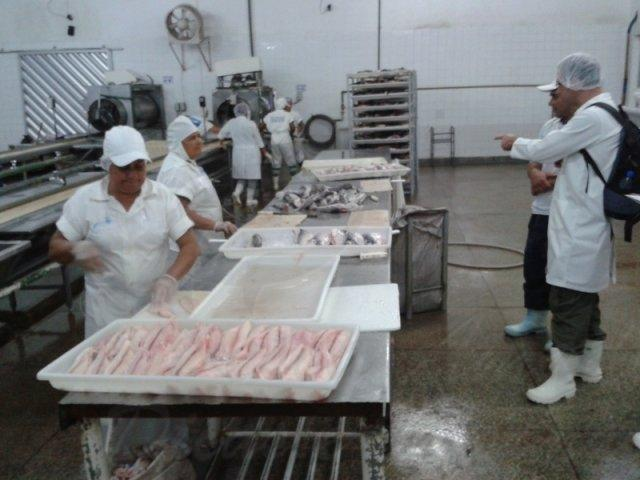ibama realiza fiscalizacao de pescado ilegal