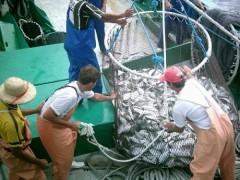 investimento setor pesqueiro maritimo