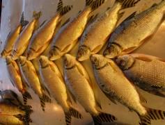 jaraqui peixe da culinaria amazonica