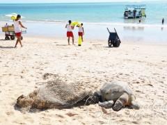 lixo prejudica animais no litoral da PB