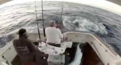 marlin salta para dentro do barco (imagem youtube)