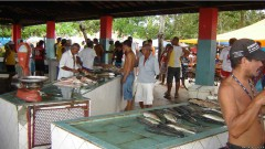 mercado de peixes na bahia