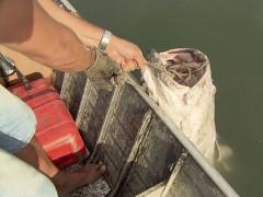 mero encontrado morto apos incendio em Santos (Foto reprodução A Tribuna)