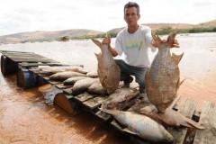 nove toneladas de peixes ja foram recolhidos nas margens do rio doce 4